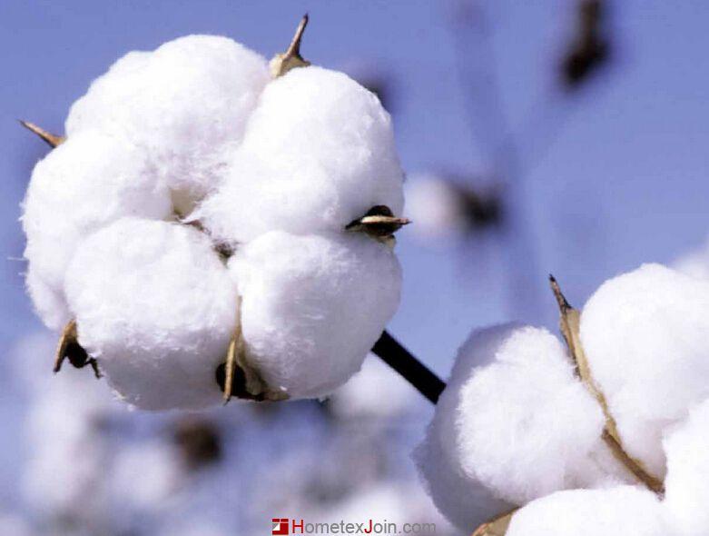 鉴别长绒棉:长绒棉会有普通棉没有的丝般光滑